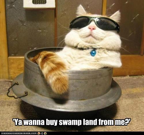 'Ya wanna buy swamp land from me?'