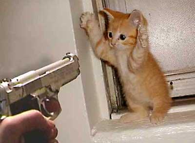 cat_burglar